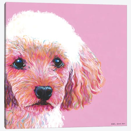 Poodle On Pink, Square Canvas Print #KWO27} by Kirstin Wood Canvas Wall Art