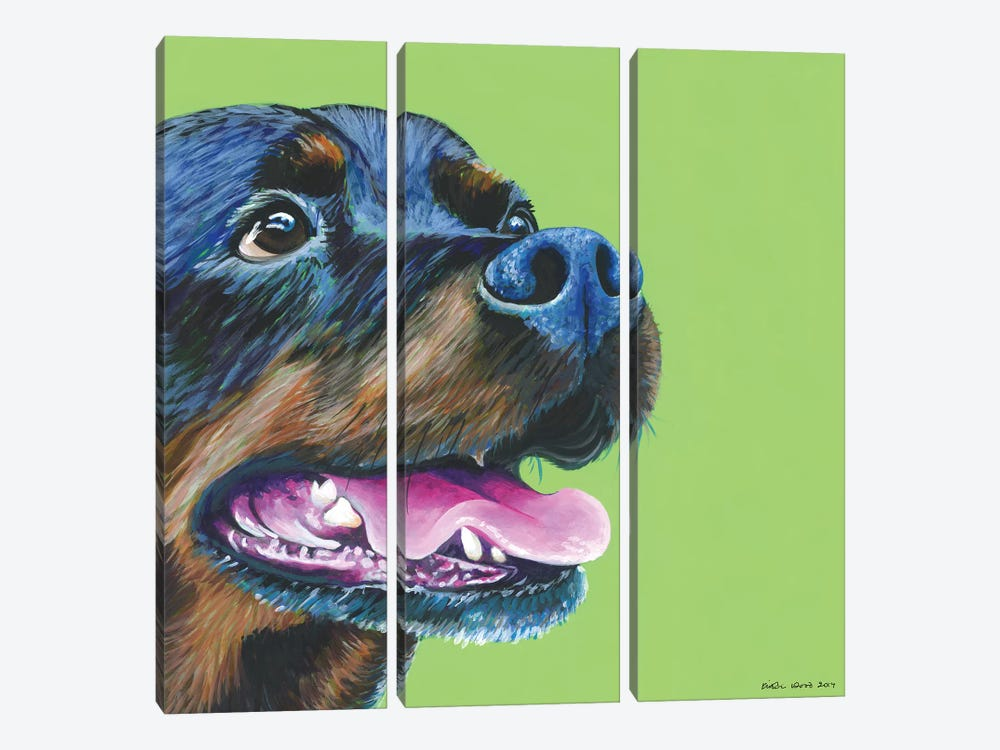 Rottweiller On Lime, Square by Kirstin Wood 3-piece Canvas Art Print