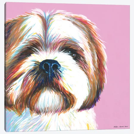 Shih Tzu On Pink, Square Canvas Print #KWO30} by Kirstin Wood Canvas Art