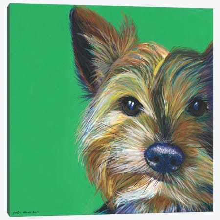 Yorkshire Terrier On Emerald, Square Canvas Print #KWO31} by Kirstin Wood Canvas Art