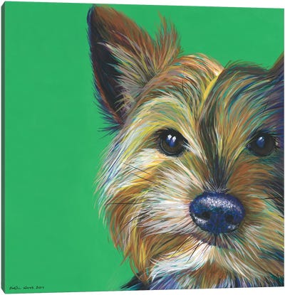 Yorkshire Terrier On Emerald, Square Canvas Art Print