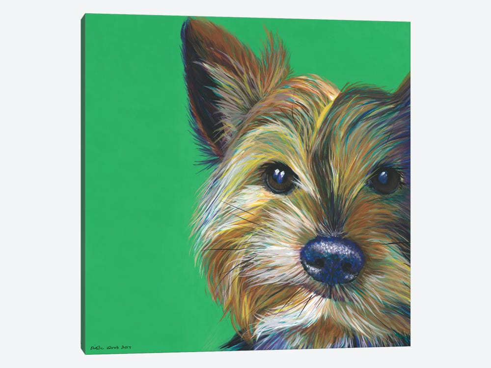 Yorkshire Terrier On Emerald, Square by Kirstin Wood 1-piece Canvas Art