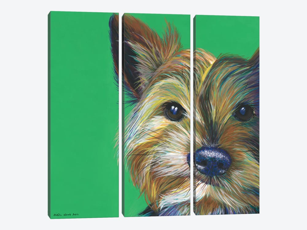 Yorkshire Terrier On Emerald, Square by Kirstin Wood 3-piece Canvas Artwork