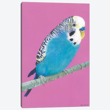 Blue Budgie Canvas Print #KWO32} by Kirstin Wood Canvas Art