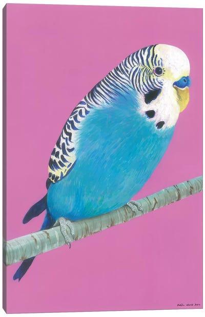 Blue Budgie Canvas Art Print