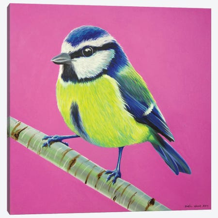 Blue Tit Canvas Print #KWO33} by Kirstin Wood Canvas Art