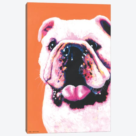 Bulldog On Orange Canvas Print #KWO4} by Kirstin Wood Canvas Print