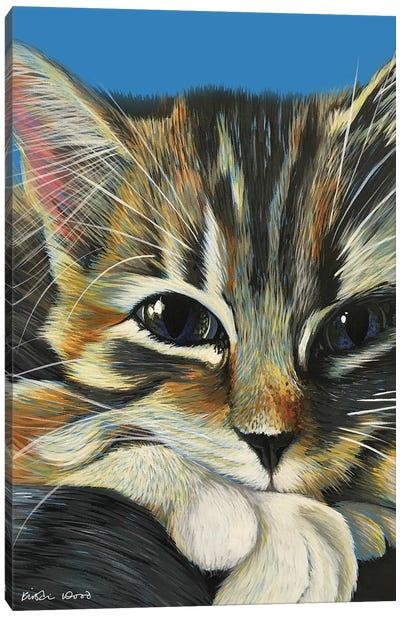 Tabby On Blue Canvas Art Print