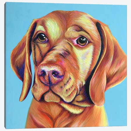 Vizsla On Duck Egg Blue Canvas Print #KWO70} by Kirstin Wood Canvas Art