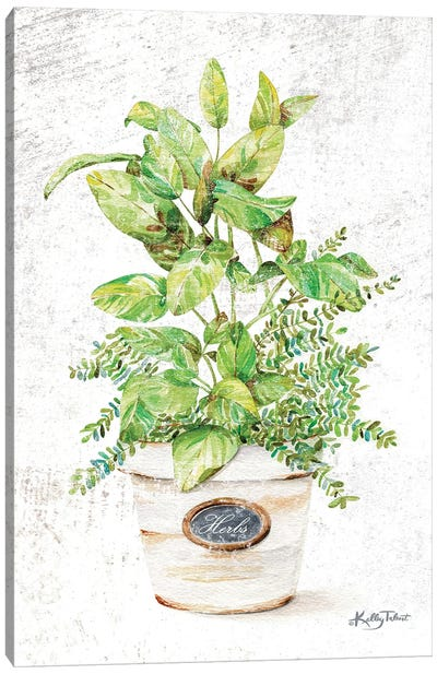 Potted Herbs Canvas Art Print