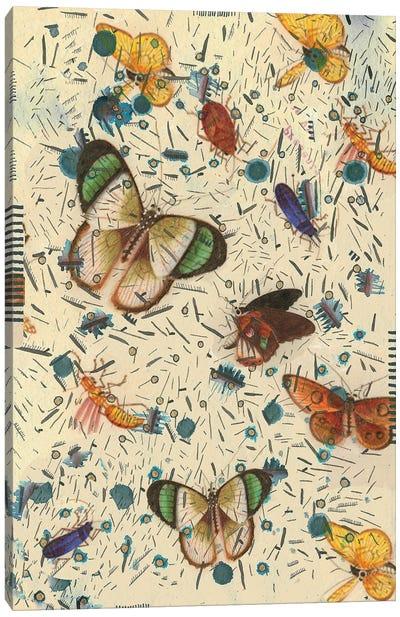 Confetti With Butterflies III Canvas Art Print