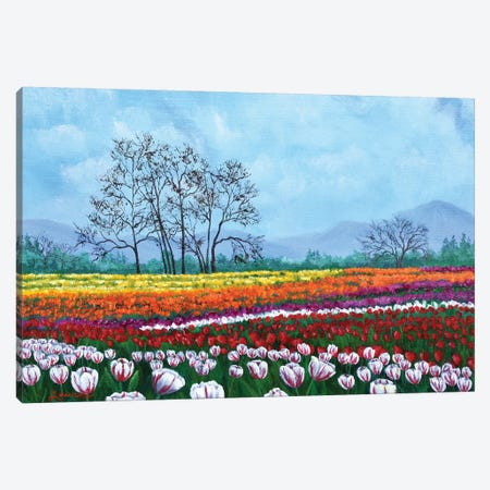 Tulip Fields Under White Fluffy Clouds Canvas Print #LAI106} by Laura Iverson Canvas Wall Art