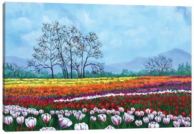 Tulip Fields Under White Fluffy Clouds Canvas Art Print
