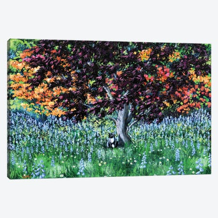 Tuxedo Cat Under A Japanese Maple Tree Canvas Print #LAI116} by Laura Iverson Canvas Art Print