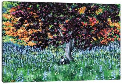 Tuxedo Cat Under A Japanese Maple Tree Canvas Art Print
