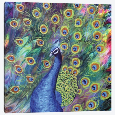 Peacock Canvas Print #LAI135} by Laura Iverson Art Print