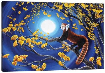 Red Panda In Golden Gingko Tree Canvas Art Print