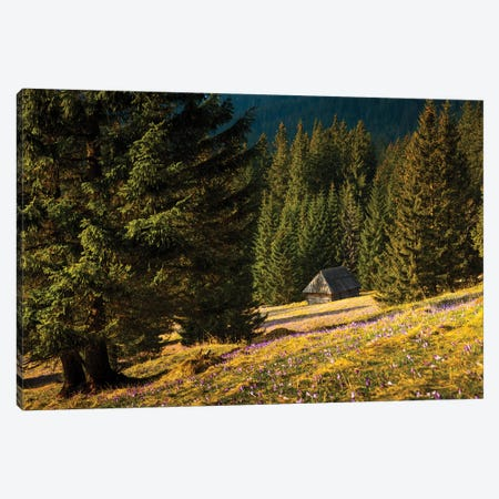 Poland, Tatra Mountains, Chocholowska Valley Canvas Print #LAJ115} by Mikolaj Gospodarek Canvas Print
