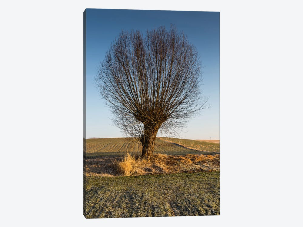 Willow, Masovia, Poland II by Mikolaj Gospodarek 1-piece Canvas Wall Art