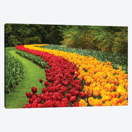 Netherlands, Keukenhof Canvas Print #LAJ36} by Mikolaj Gospodarek Canvas Art Print