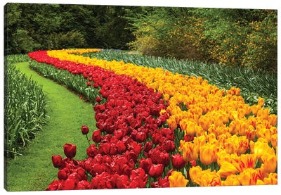 Netherlands, Keukenhof Canvas Art Print