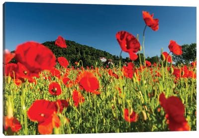 Poland, Poppy Field Canvas Art Print