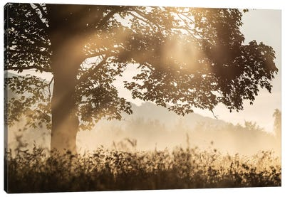Poland, Sunrise Tree Canvas Art Print