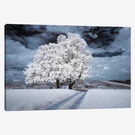 Infrared Landscape - Tree With Road Canvas Print #LAJ467} by Mikolaj Gospodarek Canvas Art Print