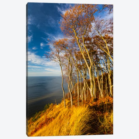 Poland, Baltic Sea, Wolin National Park Canvas Print #LAJ51} by Mikolaj Gospodarek Canvas Wall Art