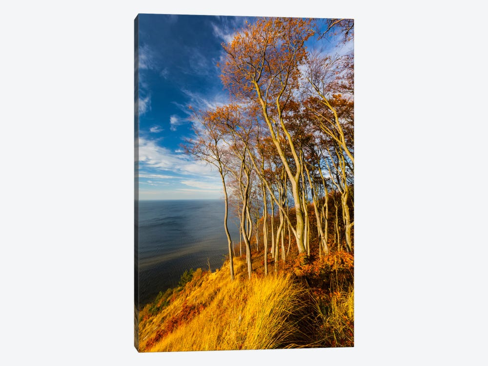 Poland, Baltic Sea, Wolin National Park 1-piece Canvas Wall Art