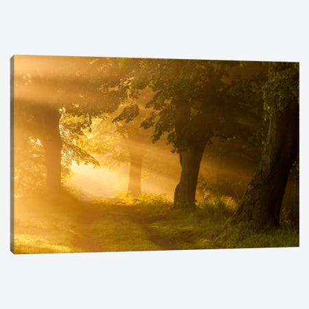 Poland, Barycz Valley Landscape Park, Sunrise Canvas Print #LAJ52} by Mikolaj Gospodarek Canvas Artwork