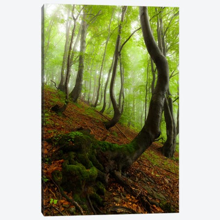 Poland, Bieszczady National Park I Canvas Print #LAJ55} by Mikolaj Gospodarek Canvas Print
