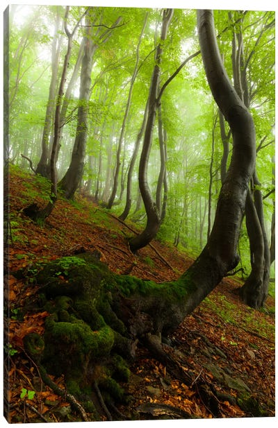Poland, Bieszczady National Park I Canvas Art Print