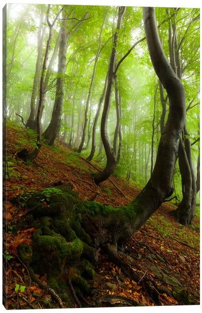 Poland, Bieszczady National Park I Canvas Art Print