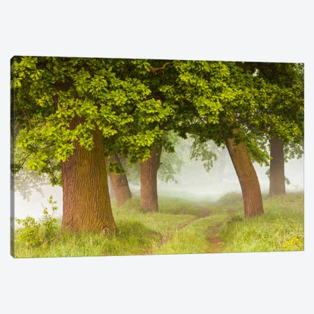 Poland, Greater Poland, Rogalin, Oaks I Canvas Print #LAJ59} by Mikolaj Gospodarek Canvas Artwork
