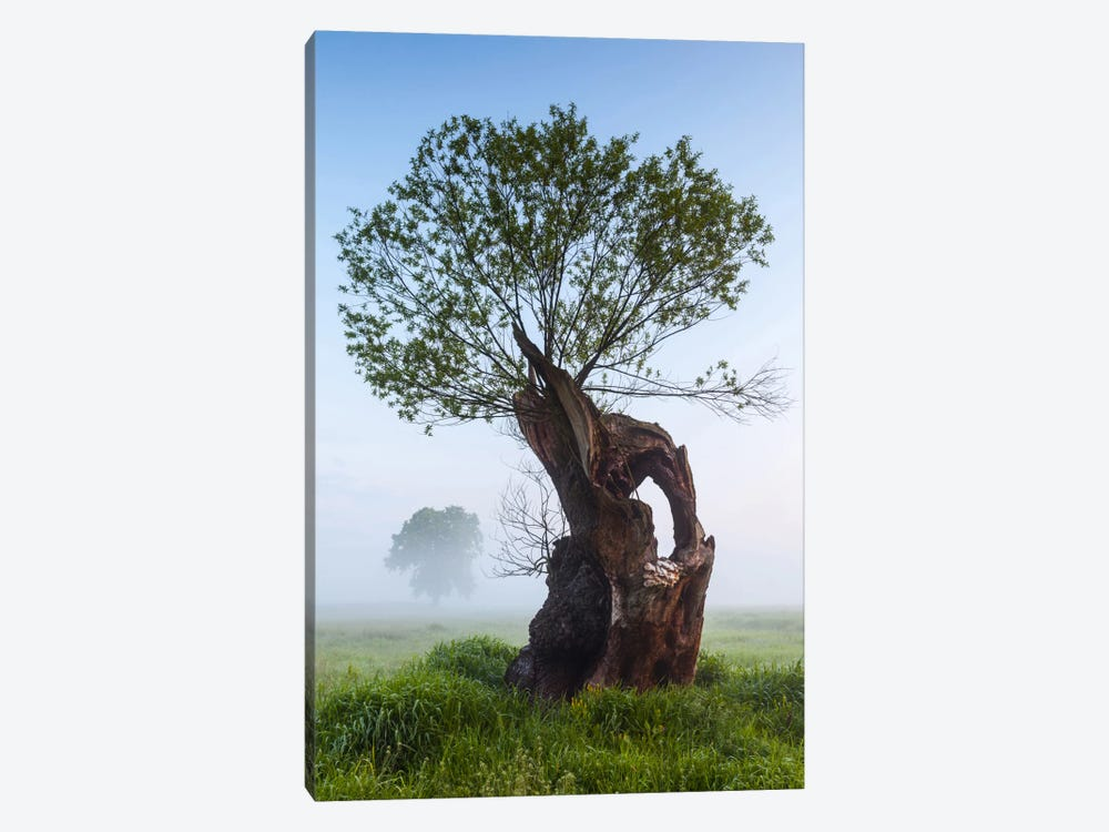 Poland, Greater Poland, Rogalin, Oaks II by Mikolaj Gospodarek 1-piece Canvas Art
