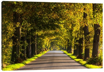 Poland, Jura, Road Canvas Art Print