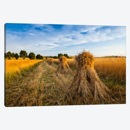 Poland, Jura, Harvest Canvas Print #LAJ64} by Mikolaj Gospodarek Canvas Art