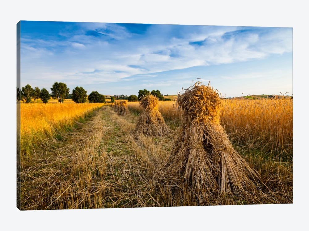 Poland, Jura, Harvest by Mikolaj Gospodarek 1-piece Canvas Artwork
