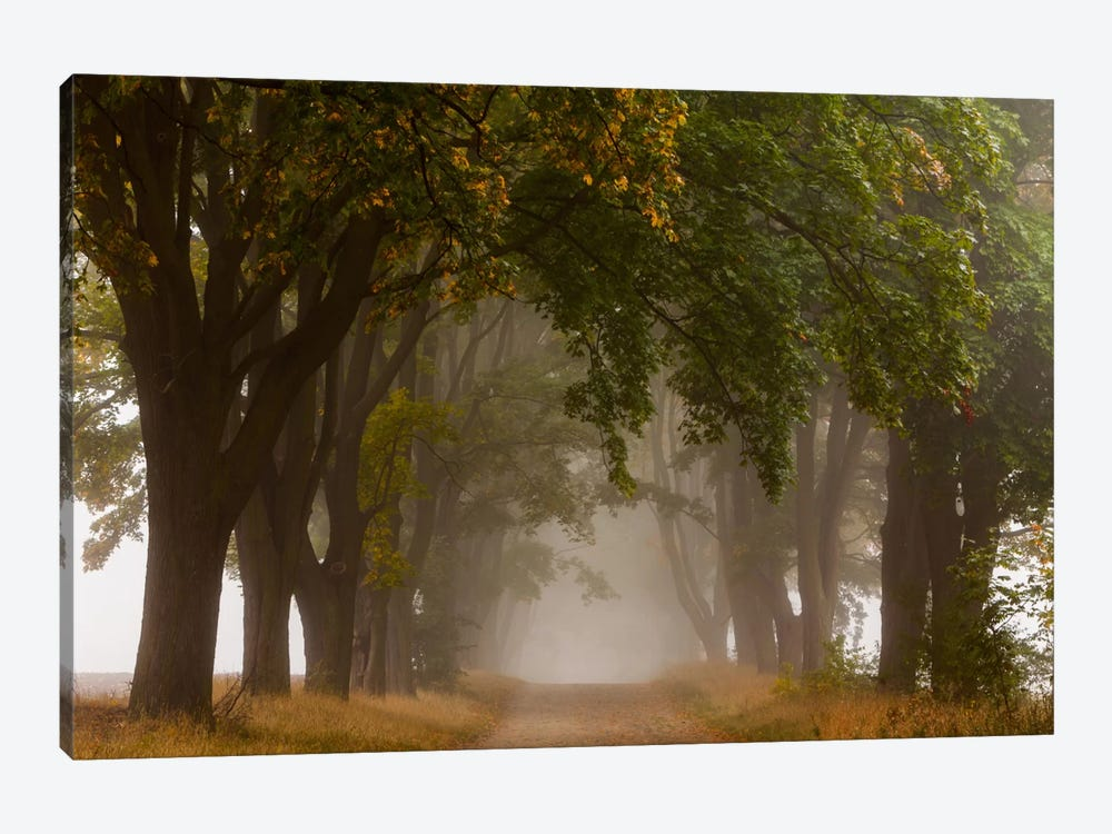 Poland, Jura, Maple Alley I by Mikolaj Gospodarek 1-piece Canvas Print