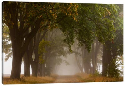 Poland, Jura, Maple Alley I Canvas Art Print