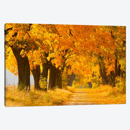 Poland, Jura, Maple Alley II Canvas Print #LAJ66} by Mikolaj Gospodarek Canvas Art