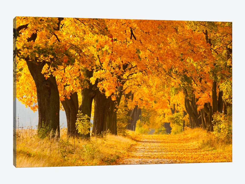 Poland, Jura, Maple Alley II by Mikolaj Gospodarek 1-piece Canvas Art