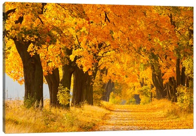 Poland, Jura, Maple Alley II Canvas Art Print