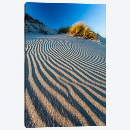 Poland, Slowinski National Park, Dune Canvas Print #LAJ79} by Mikolaj Gospodarek Canvas Wall Art