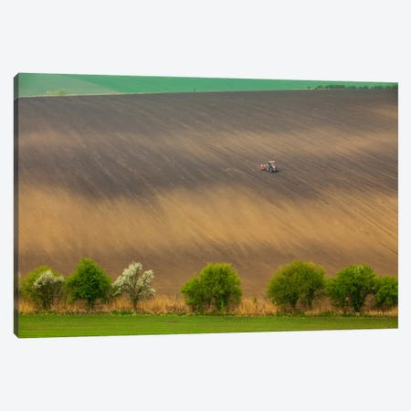 Czech Republic, Moravia, Rapeseed Field I Canvas Print #LAJ7} by Mikolaj Gospodarek Canvas Art Print
