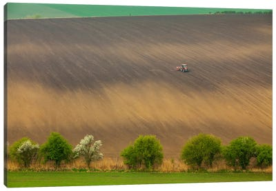 Czech Republic, Moravia, Rapeseed Field I Canvas Art Print
