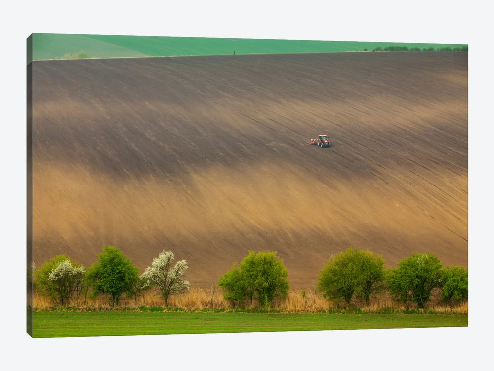 Czech Republic, Moravia, Rapeseed Field I by Mikolaj Gospodarek 1-piece Canvas Artwork