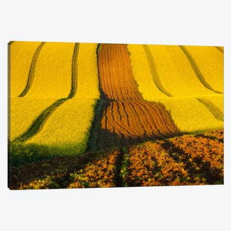 Czech Republic, Moravia, Rapeseed Field II Canvas Print #LAJ8} by Mikolaj Gospodarek Canvas Artwork