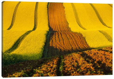 Czech Republic, Moravia, Rapeseed Field II Canvas Art Print